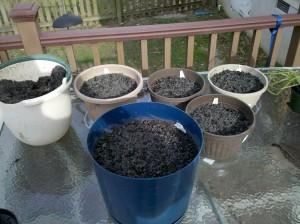 Vegetables planted